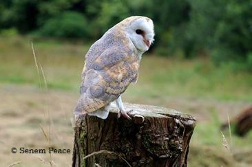 Photo: Senem Peace