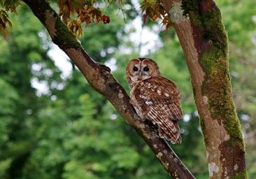 owl2-muncaster-web